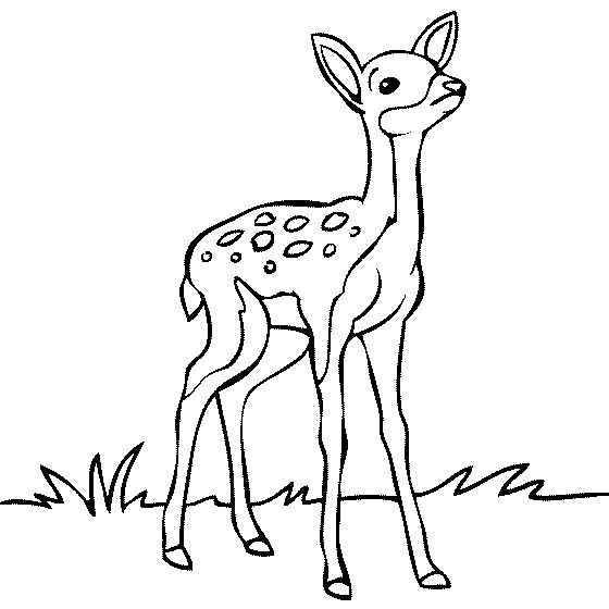 Baby deer fawn sketches images on clip art.