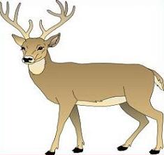 Deer clipart #20