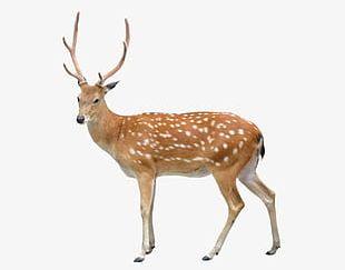 Deer Clipart PNG Images, Deer Clipart Clipart Free Download.