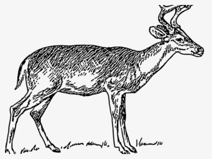 Free Whitetail Deer Clip Art with No Background.