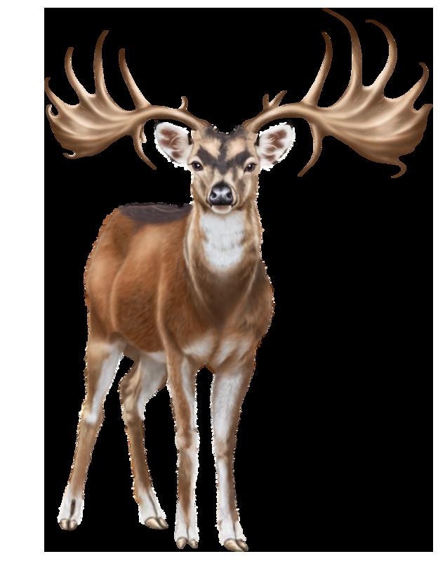 Deer PNG Clip Art.