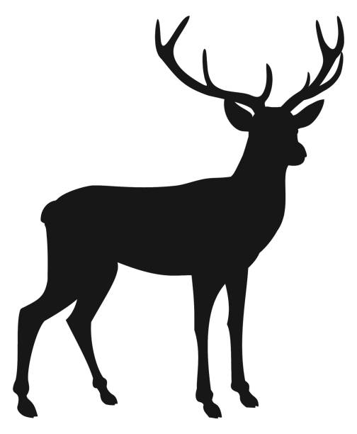 Best Deer Silhouette Illustrations, Royalty.