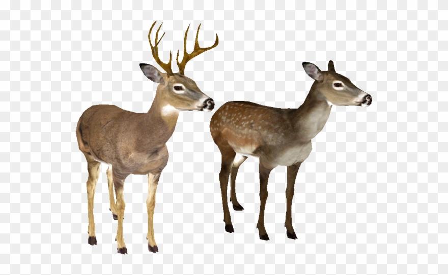 Deer Clipart Transparent Background.