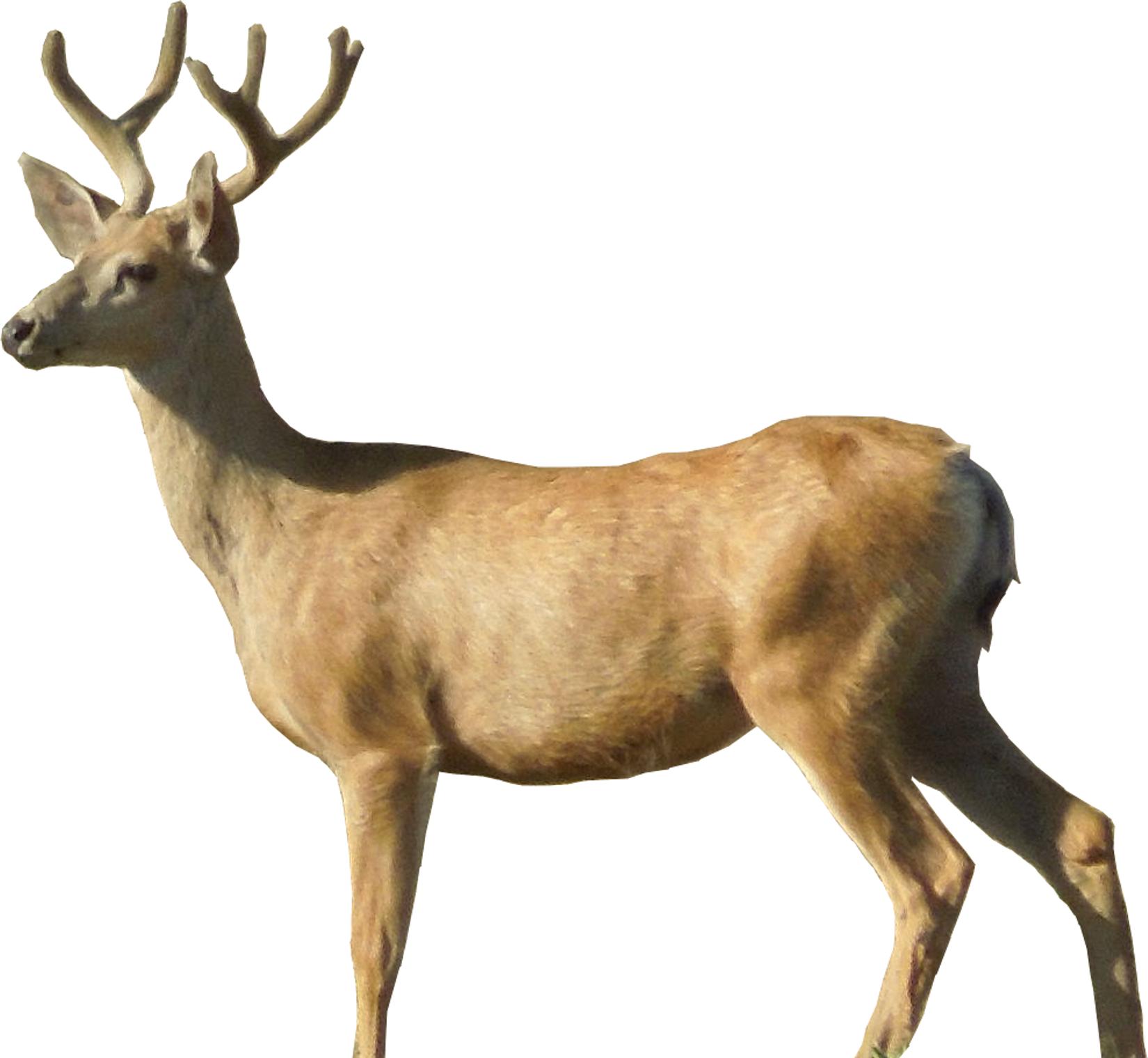 Free Deer Transparent Background, Download Free Clip Art.
