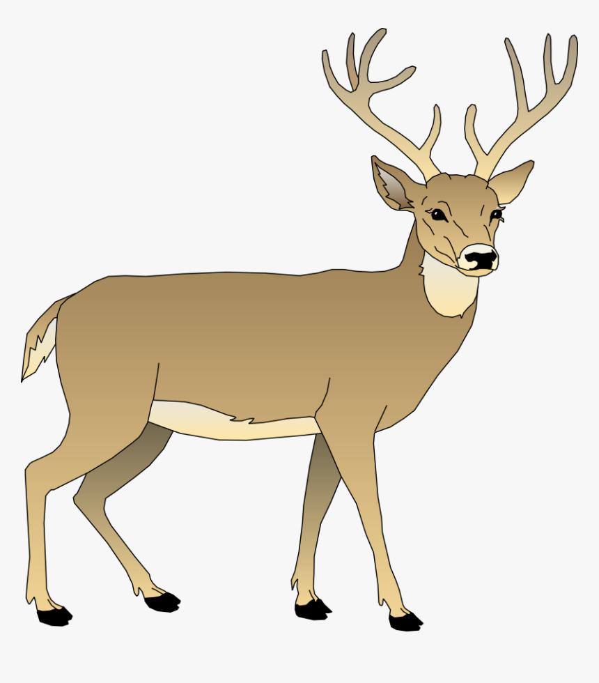 Vector Deer.