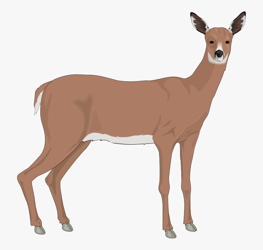 Deer 3 Free Vector.