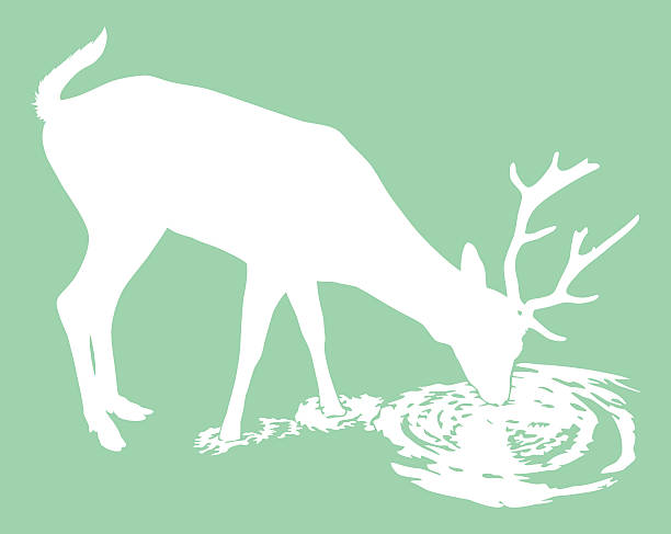 Deer Drinking Water Clip Art, Vector Images & Illustrations.