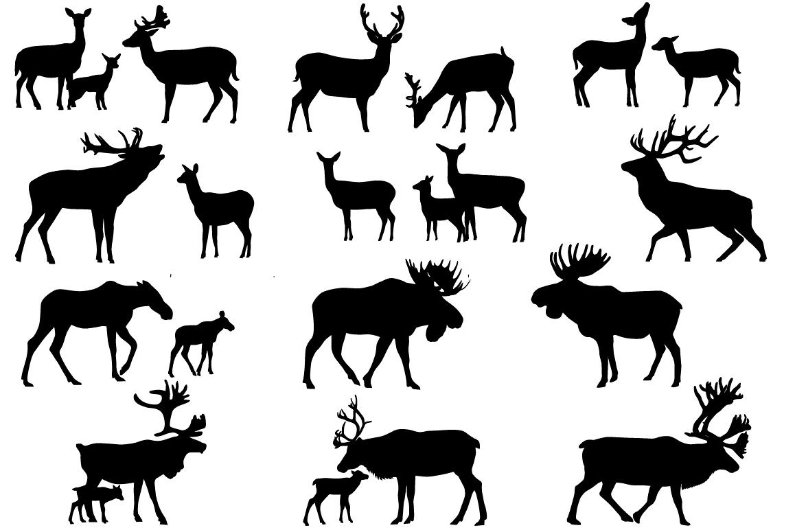 Deer family.