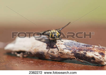 Stock Photo of A deer fly rests on a piece of driftwood.