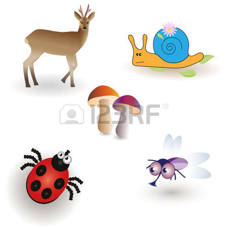 Deer Fly Stock Photos Images. Royalty Free Deer Fly Images And.