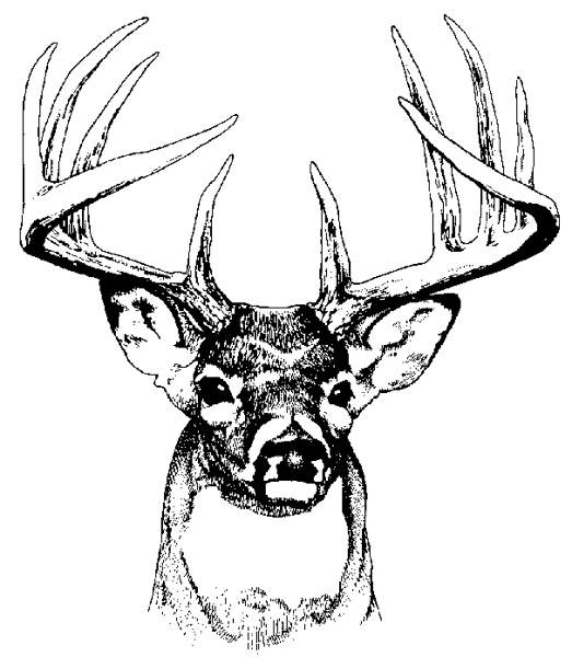 Buck deer head clipart.