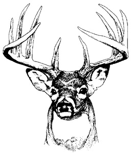 Download black and white deer head clipart White.
