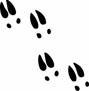 Deer Footprints Cliparts.