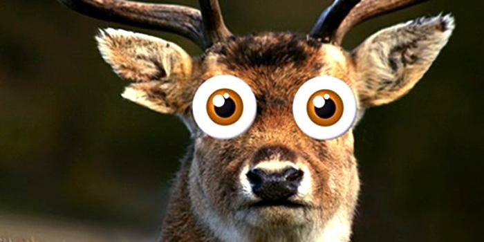 Download Free png Deer In The Headlights Png.