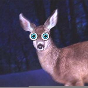 Deer Caught In Headlights Clipart.