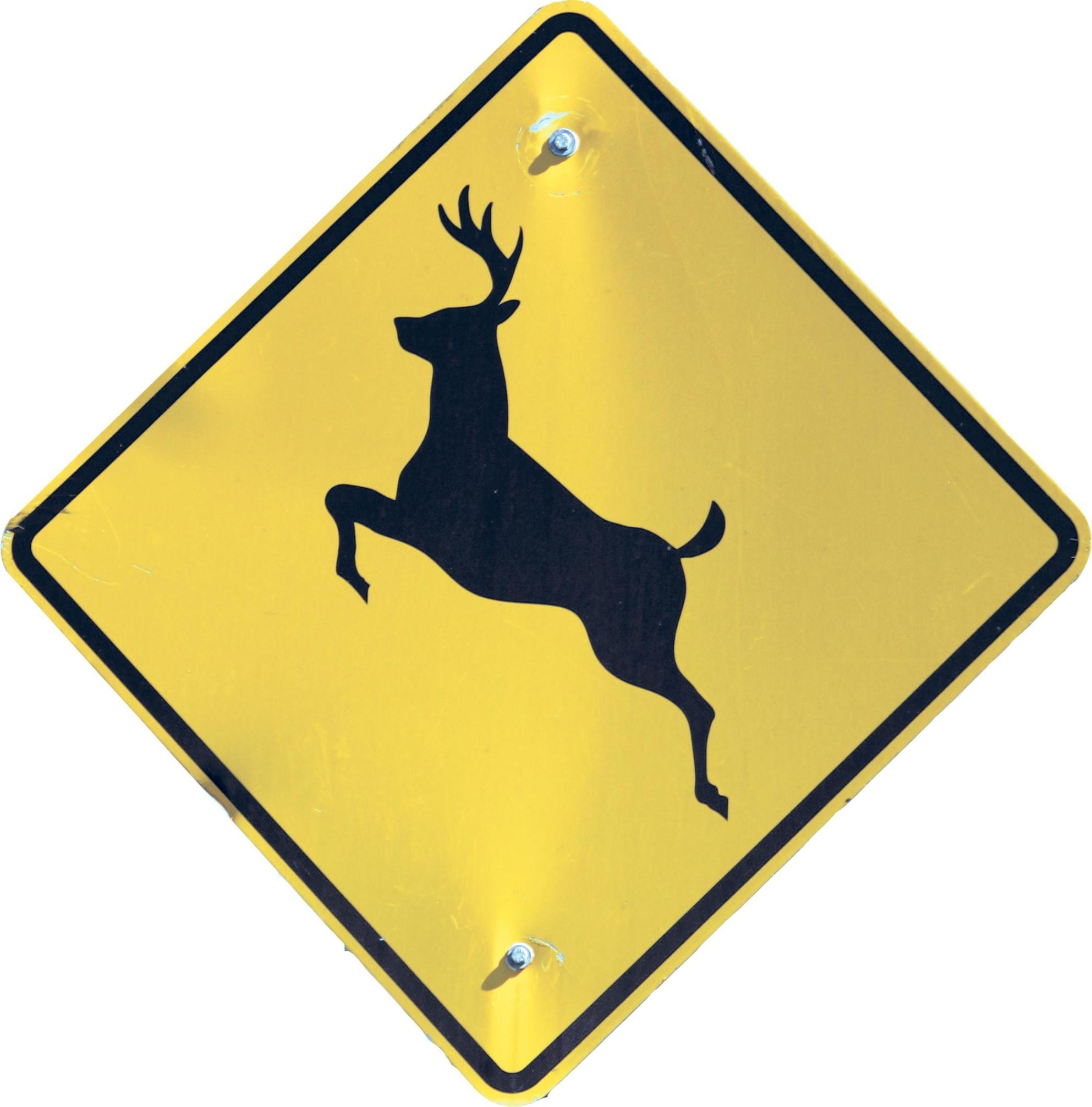 No more deer in the headlights.