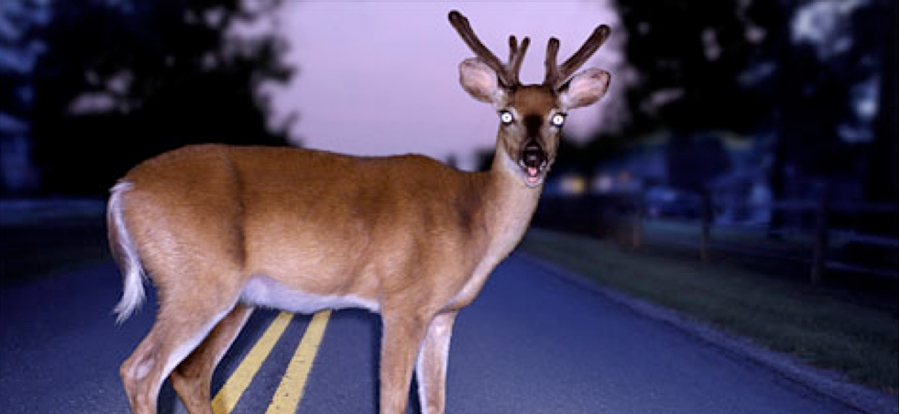 A Deer In The Headlights.