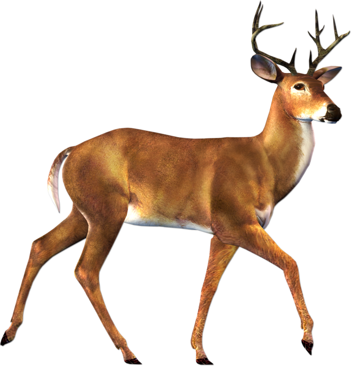 Deer in woods clipart 20 free Cliparts | Download images ...
