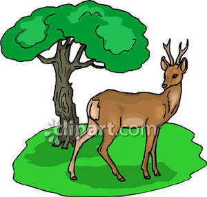 Deer in woods clipart.