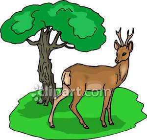 Deer in woods clipart.