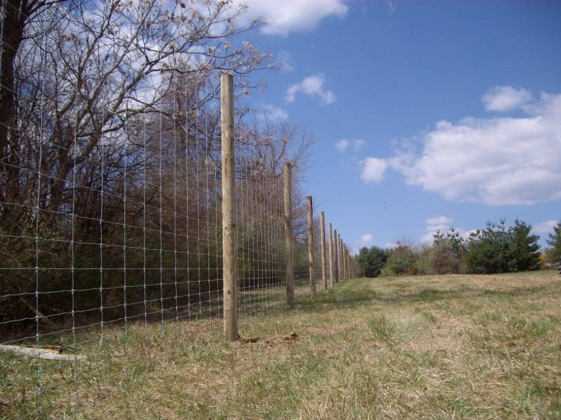 Deer Fence.