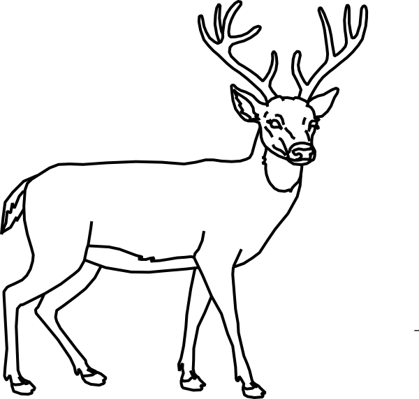 Line Drawings Of Animals Deer : Deer outline clipart black and white clipground