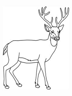 8 Best Deer outline images.