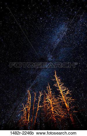 Stock Photography of USA, Washington State, Olympic National Park.