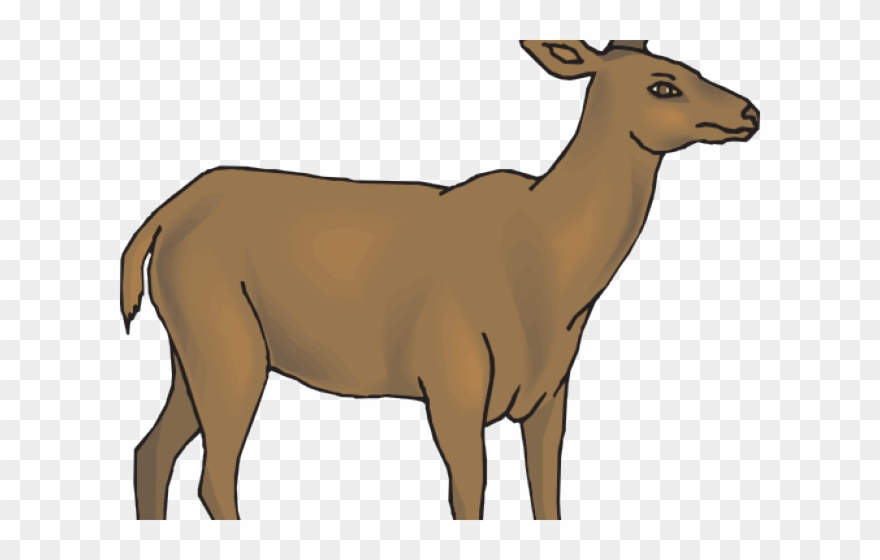 White Tailed Deer Clipart Whitetail Deer.