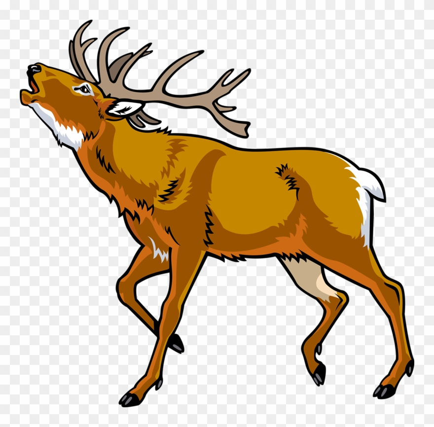 Elk Red Deer Clip Art Cartoon Wild.