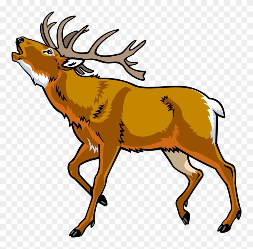 Elk Red Deer Clip Art Cartoon Wild.