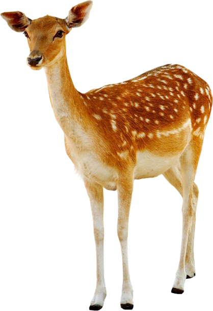 Deer PNG images free download, deer PNG.