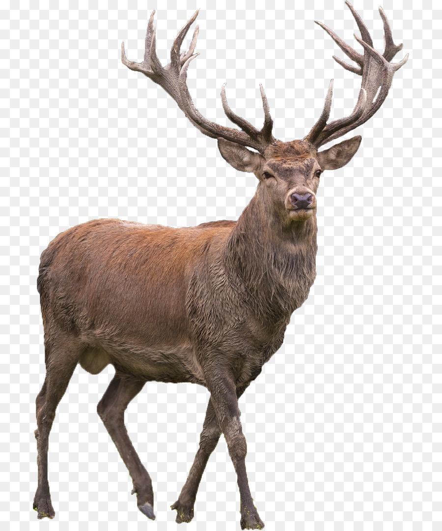 Deer Png Png & Free Deer.png Transparent Images #16853.