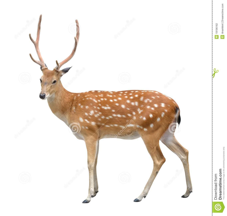 Deer PNG HD Transparent Deer HD.PNG Images..