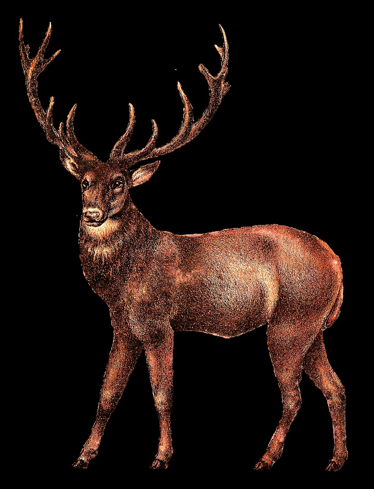 Antique Deer Image transparent PNG.