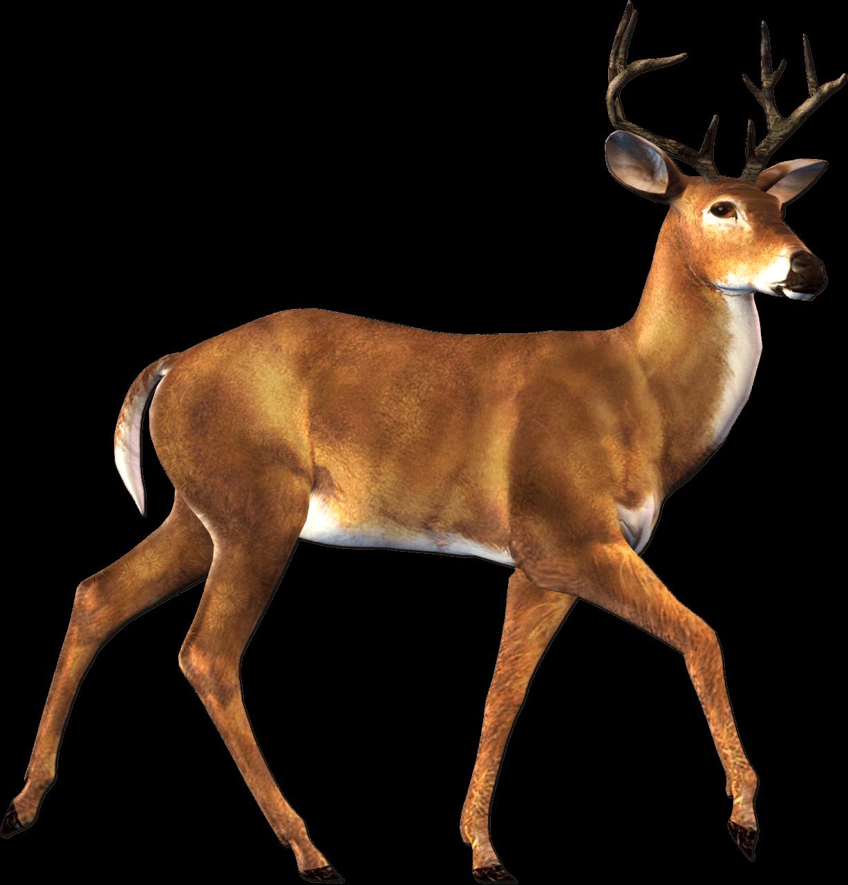 Walking Deer Sideview transparent PNG.