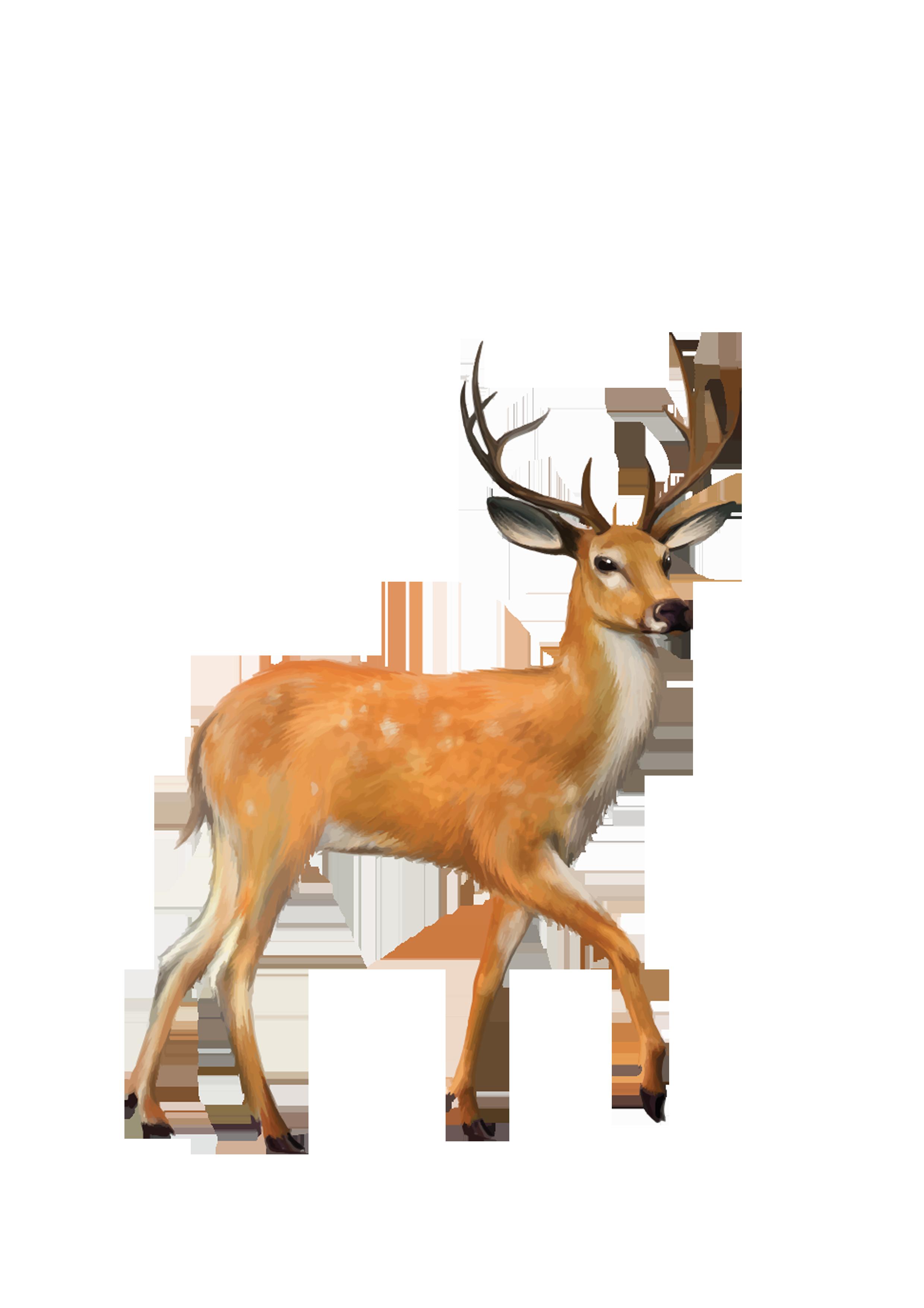 Deer PNG Photo Background.