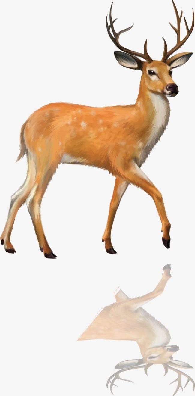 Deer PNG, Clipart, Animal, Deer, Deer Clipart, Deer Clipart.