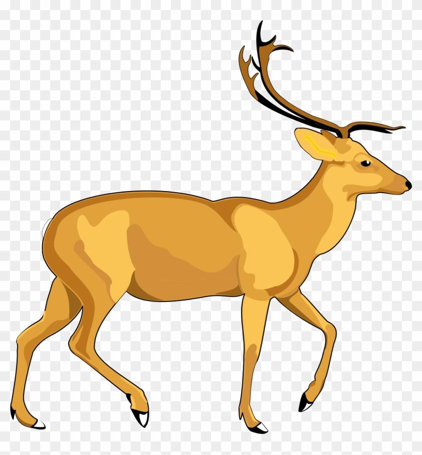 Deer Vector.