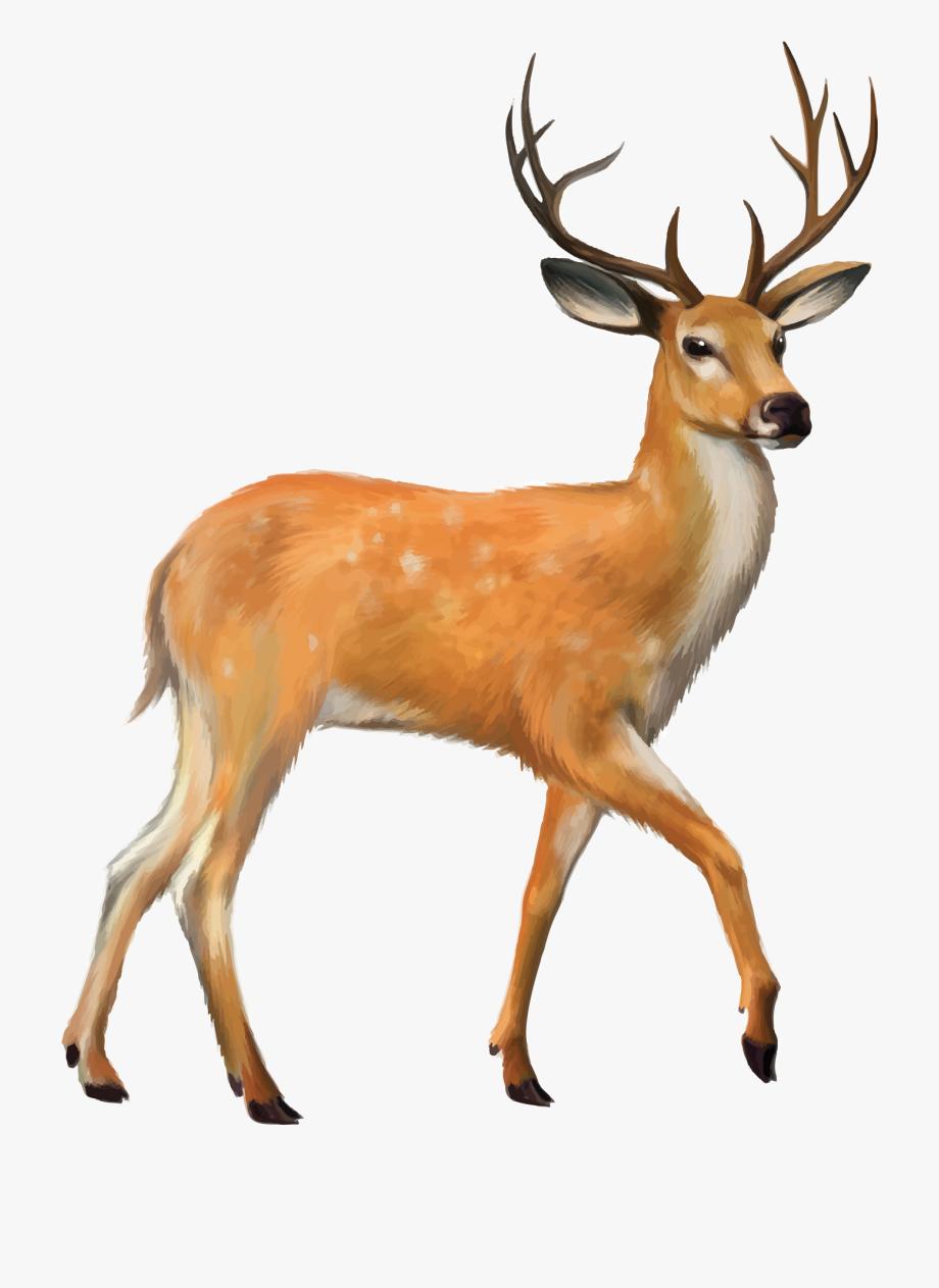 Deer Vector Mule.