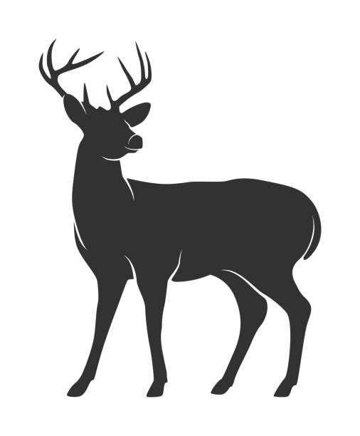 Best Deer Silhouette Illustrations, Royalty.