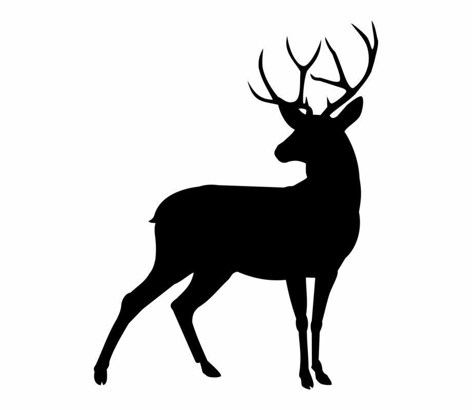 Animal, Deer, Plume.