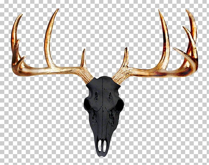 Mule Deer Antler Wall Skull PNG, Clipart, Accent Wall, Animals.