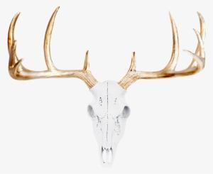 Deer Skull PNG, Free HD Deer Skull Transparent Image.