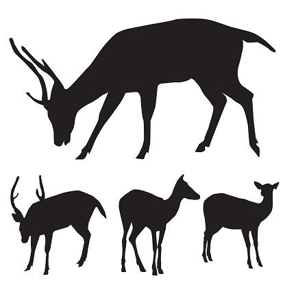 Silhouette Of African Deer Species Clip Art, Vector Images.
