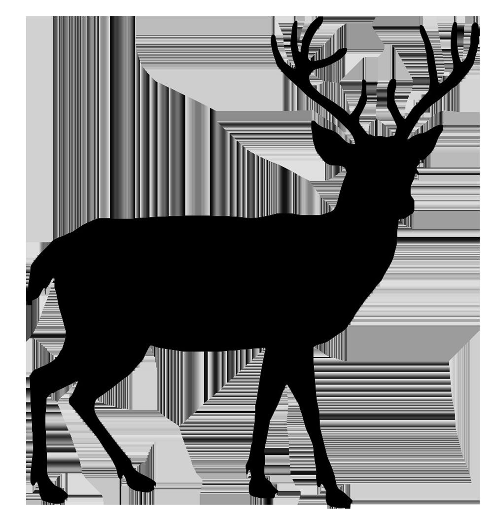 Deer PNG Transparent Images.