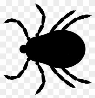 We Remove Ticks Jiminey Kricket Exterminating.