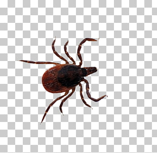 29 deer Tick PNG cliparts for free download.