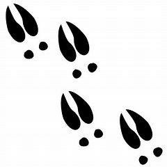 Deer Tracks SVG.