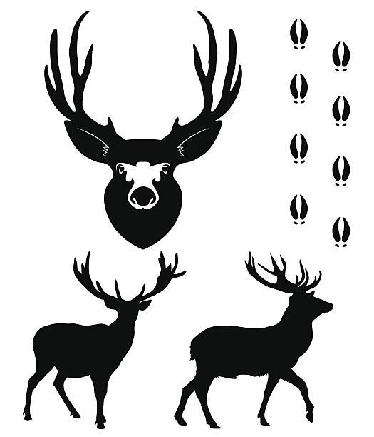 Best Deer Tracks Illustrations, Royalty.